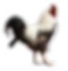 kisspng-chicken-rooster-livestock-poultr