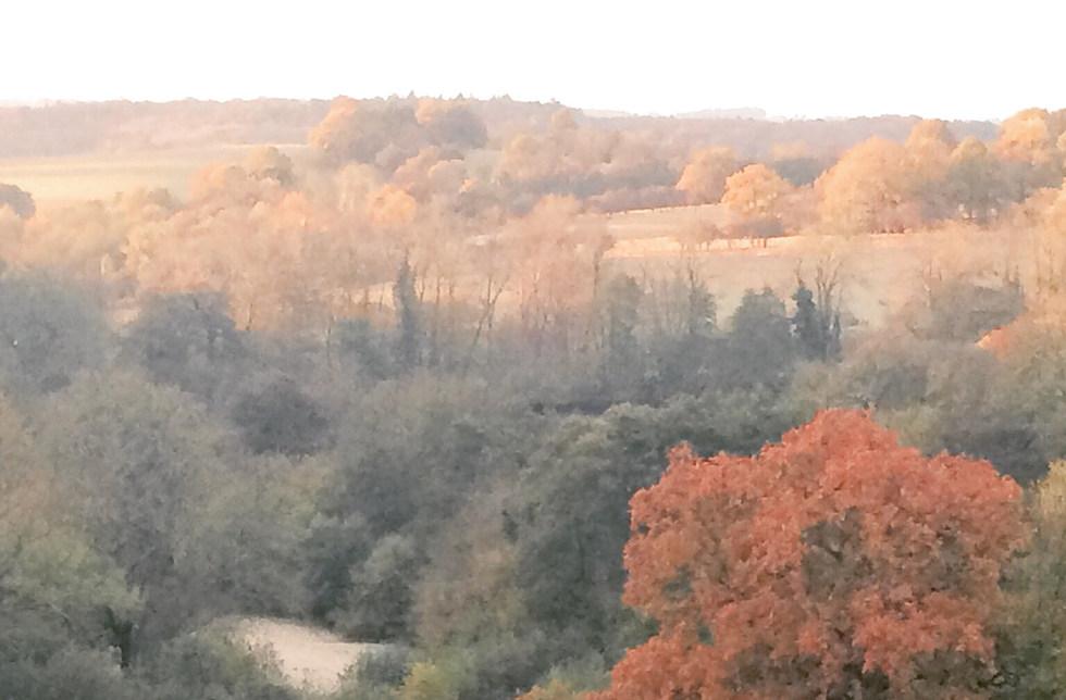 #scragoakviews autumn