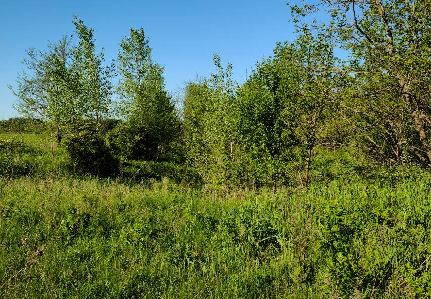 Field overrun by underbrush - Before