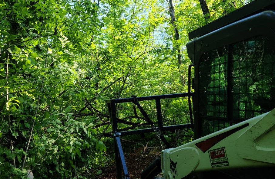 Clearing A Path Through Thick Forest - Before