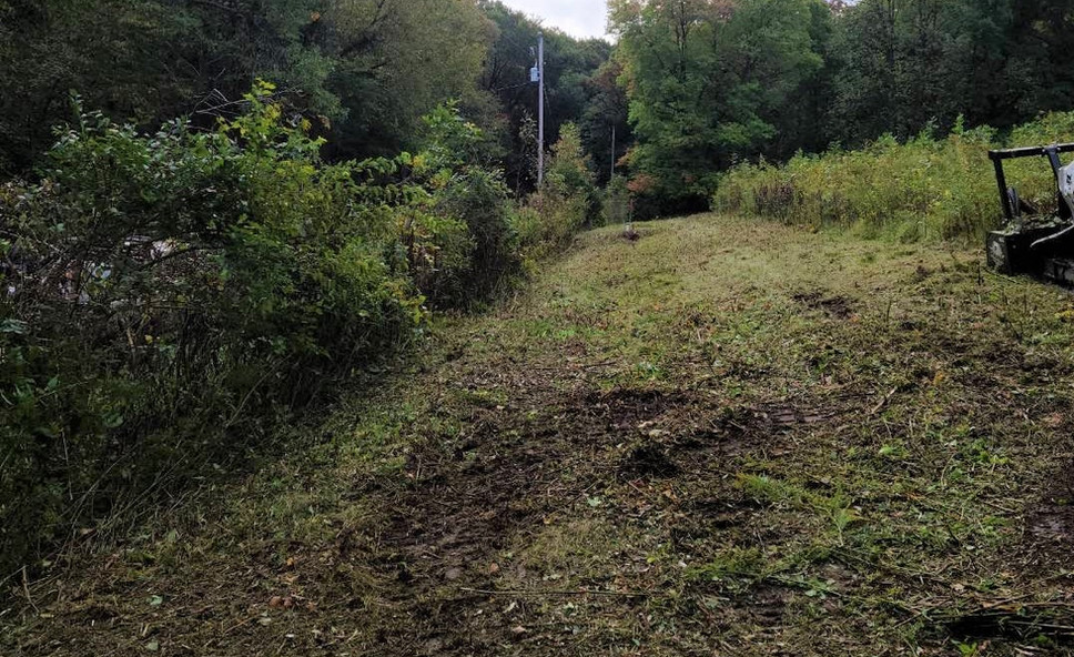 Fenceline and Field Clearing