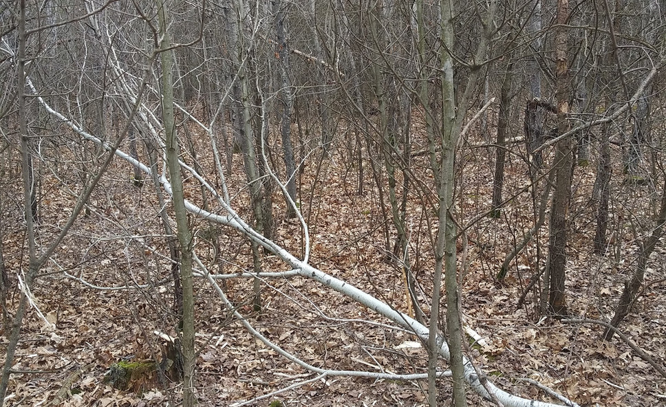 Wooded Area - Before