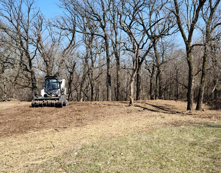 Cleared underbrush on field