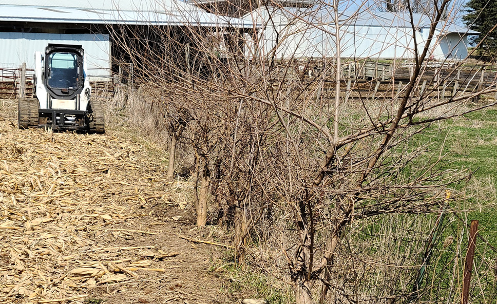 Fence Line - Before