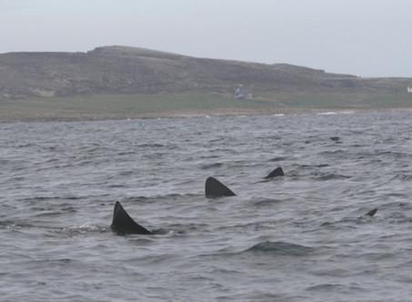 Sharks Hit West Coast