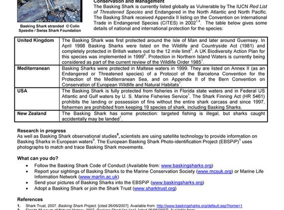 Basking Shark Factsheet_Page_2.jpg