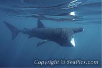 096625-200-basking-shark.jpg
