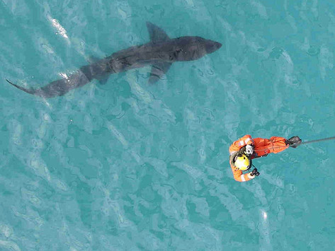 First Irish Basking Shark Seminar