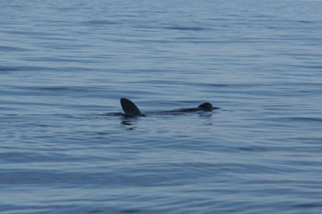 BSW-Shark_Tracker-Bunagee_Beauty.jpg