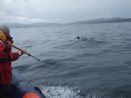 Re-sighting of Tagged Shark from Scotland