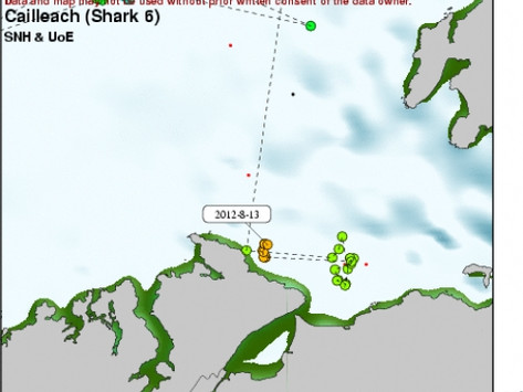 Scottish Shark Moves South
