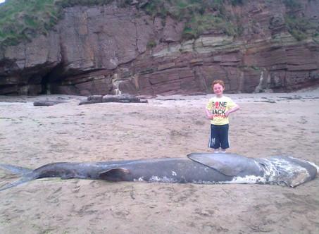 Stranded Shark Sculptured