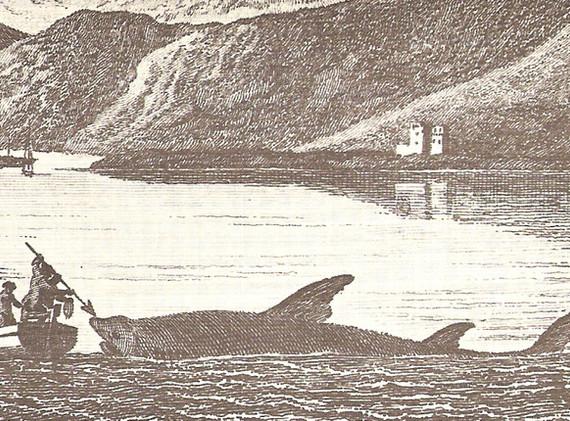 basking shark fishing olde print.jpg