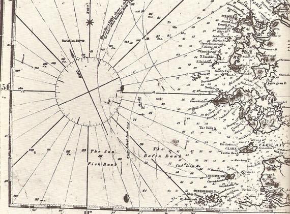basking shark marine chart.jpg