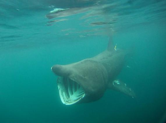 Underwater Shark.jpg