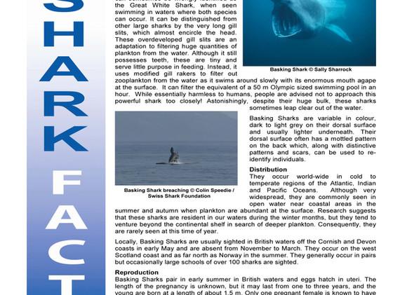 Basking Shark Factsheet_Page_1.jpg