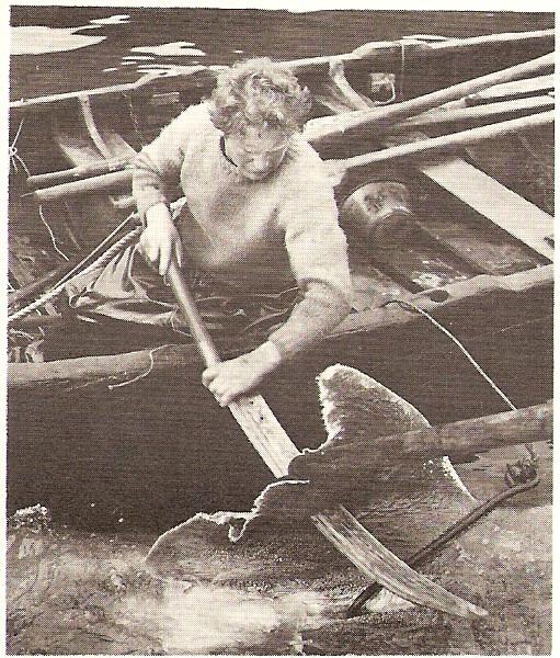 chopping fins.jpg