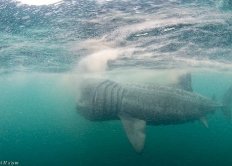 BBC2 Feature Shark Project