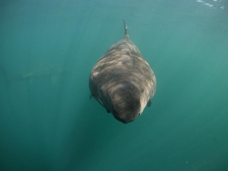 Basking Shark Research on RTE Player