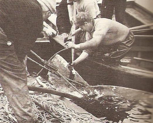 chopping fins2.jpg