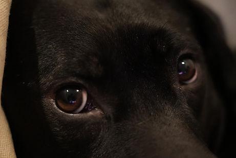 Dog1.jpeg