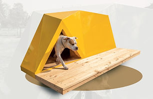 Rafabo kennel Sheila - color yellow - 00