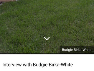 Interview with a Chicago Curator and Writer, Budgie Birka-White