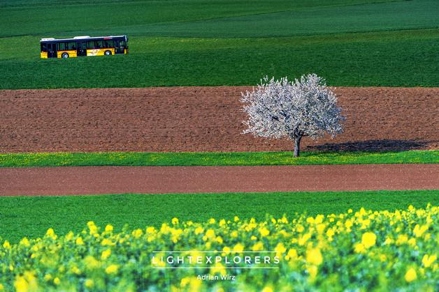 Wenslingen-Baselland