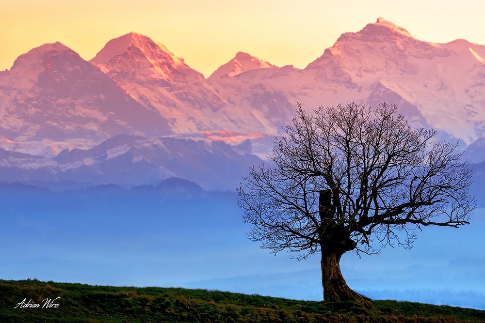 Blick zu Eiger, Mönch und Jungfrau