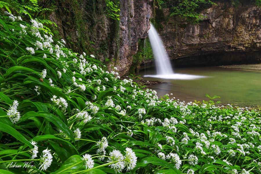 Bärlauch und Wasserfall im Baselbiet
