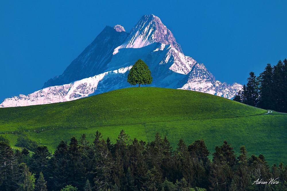 Baum auf Emmentaler Hügel
