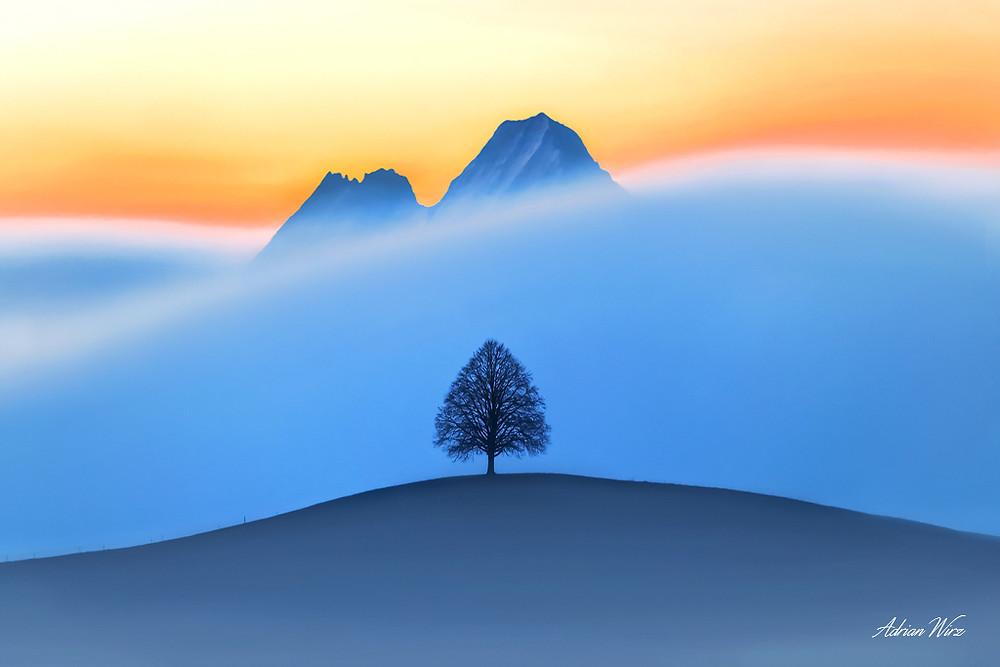 Emmentaler Hügel mit Baum