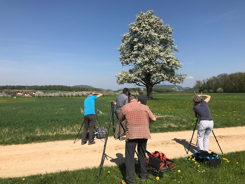 Birnbaum in Rünenberg