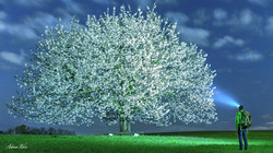 Kirschblüte im Kanton Baselland