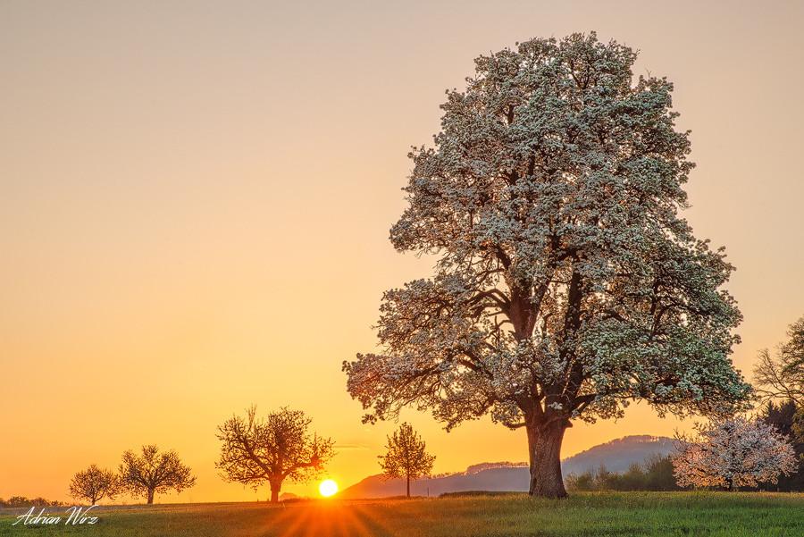 Obstblüte im Baselbiet