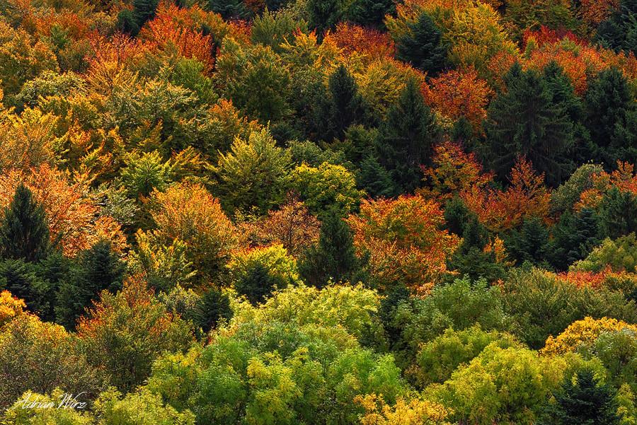 Herbstwald im Kanton Baselland