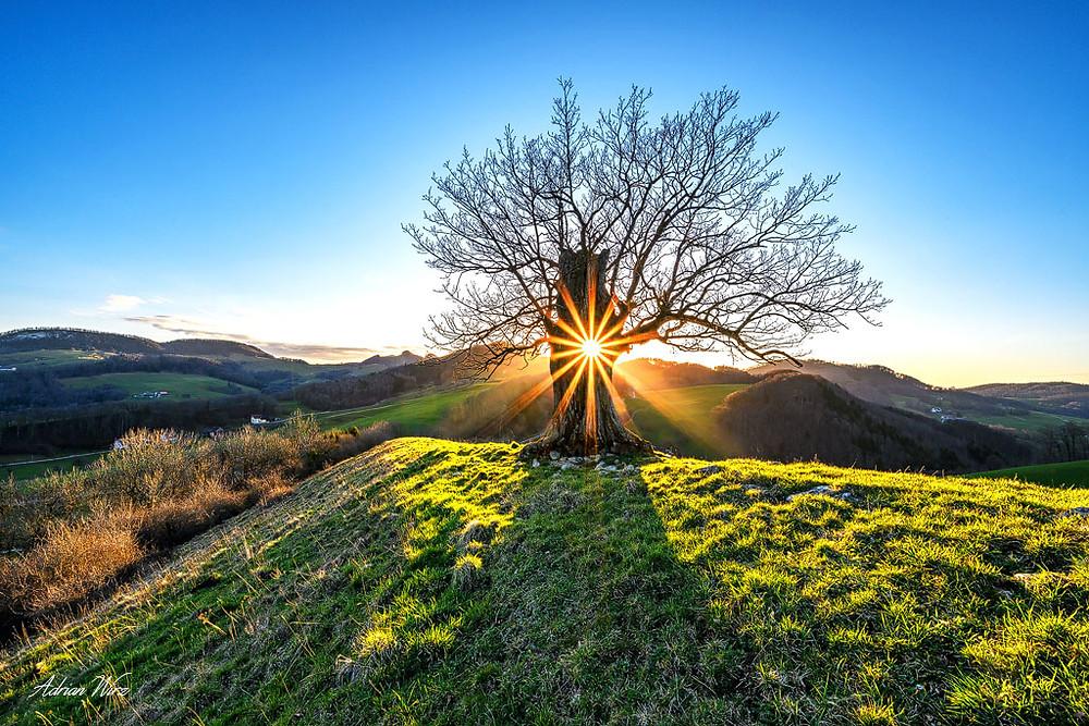 Die Sonne scheint durch ein Loch im Stamm dieser alten Eiche