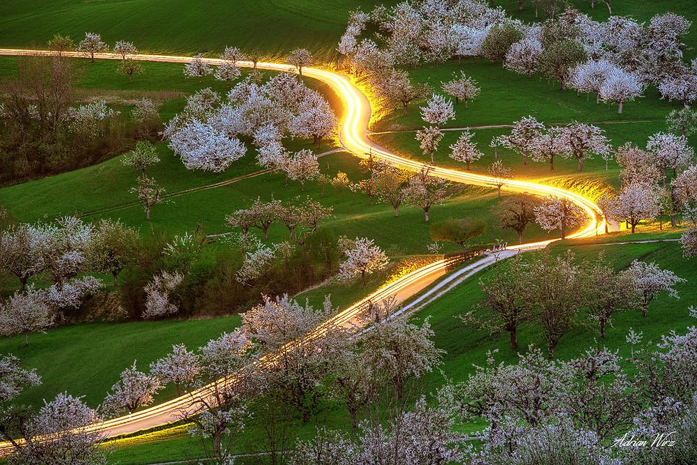 Leuchtspuren zwischen den Kirschbäumen von Nuglar und St. Pantaleon