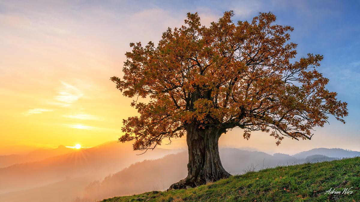 Alte deutsche Eiche im Herbst