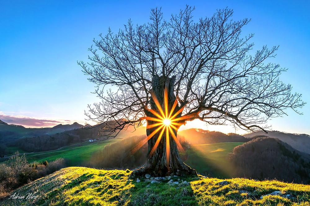 Sonnenstern durch ein Loch im Stamm dieser Eiche
