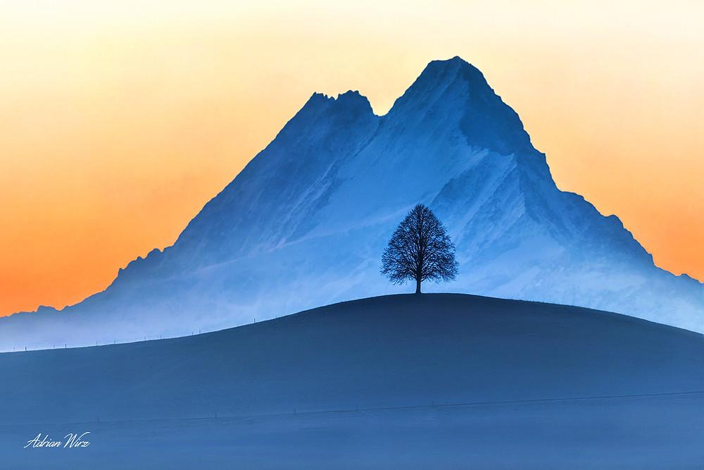 Ein Baum auf einem Hügel im Emmental vor dem Schreckhorn