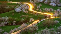 Kirschblüte bei Nuglar