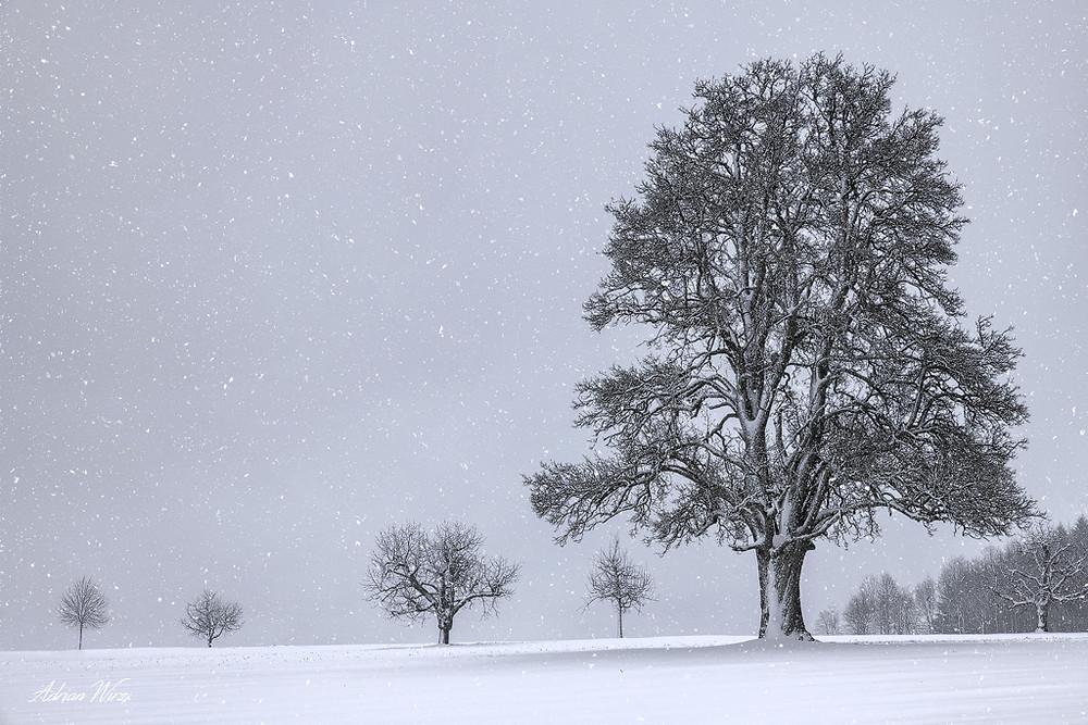 Schneefall im Oberbaselbiet
