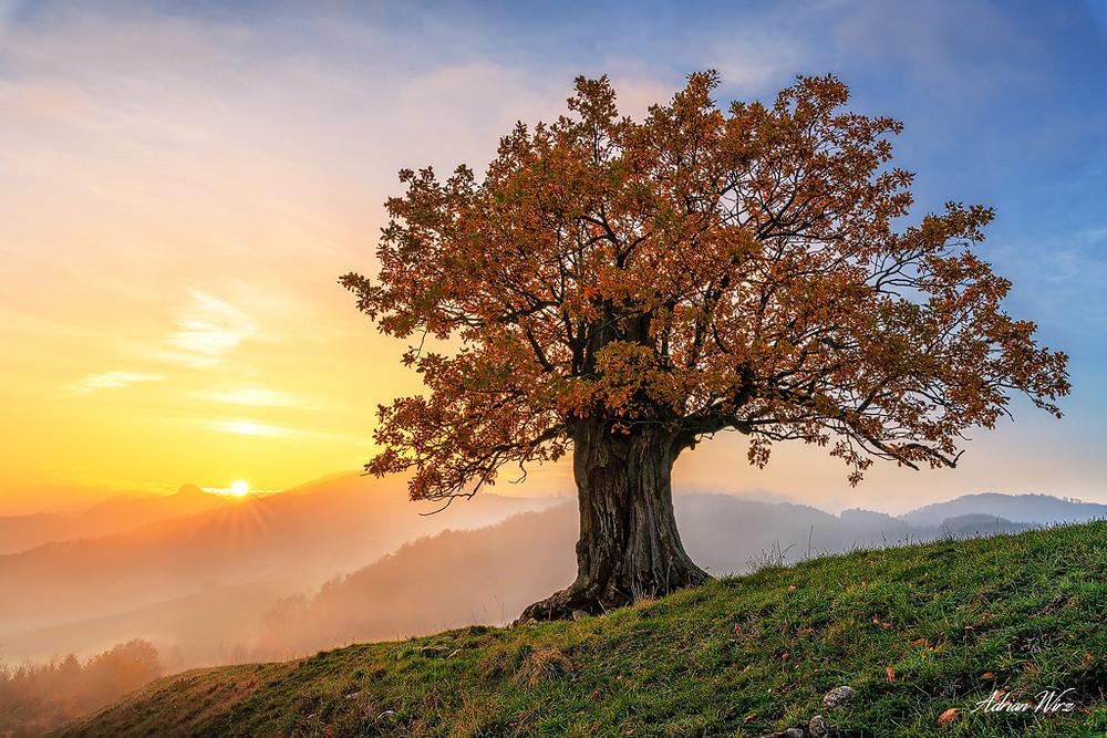 Sonnenuntergang im Schweizer Jura