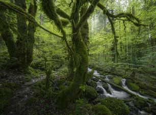 Gorges du Pichoux_1200.jpg