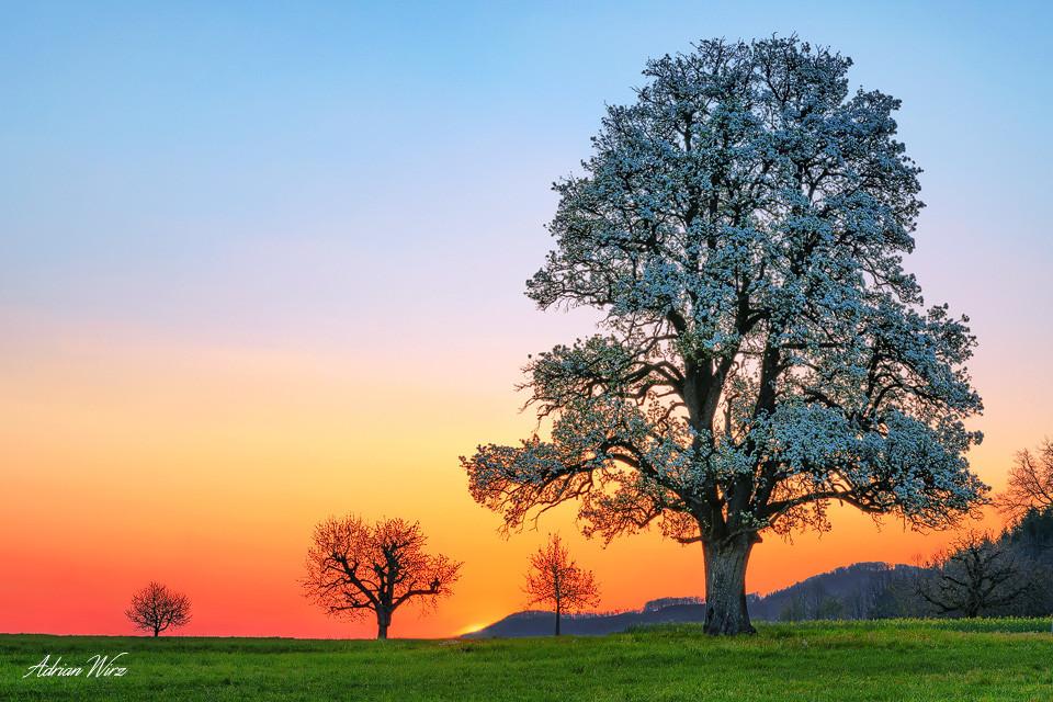 Sonnenaufgang beim Birnbaum im Baselbiet