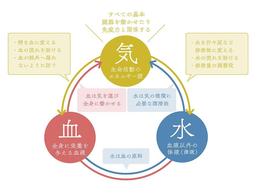 肉体の循環図