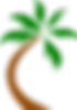 coconut-palm-312154_640.png