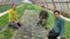 Kartoffelkombinat 3.202000003.jpg