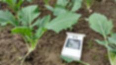 Kartoffelkombinat 3.202000004.jpgKartoffelkombinat ELLA von der HAIDE